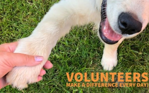 Paw in hand with text: Volunteers make a difference every day